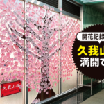 【卒業おめでとう】井の頭線・久我山駅で胸アツな「久我山桜」が咲いています!