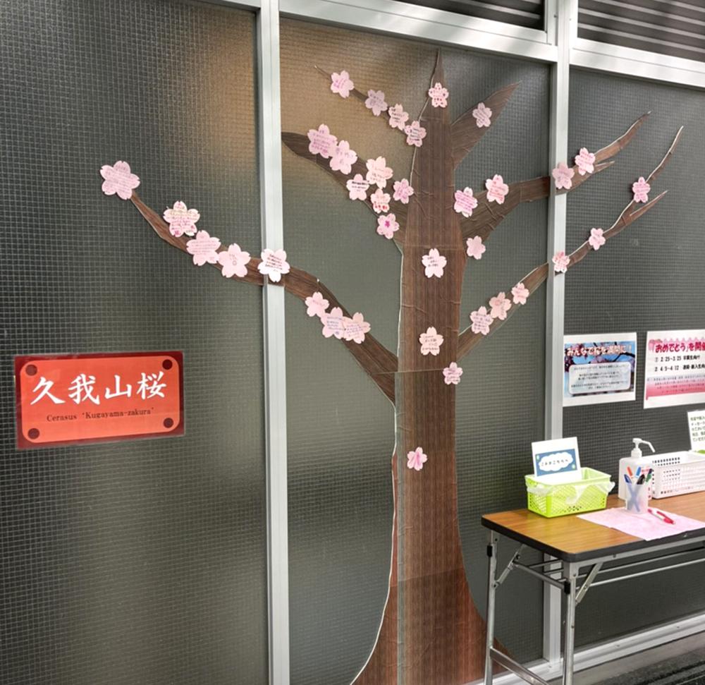 【2日目】2/26(金)の久我山桜