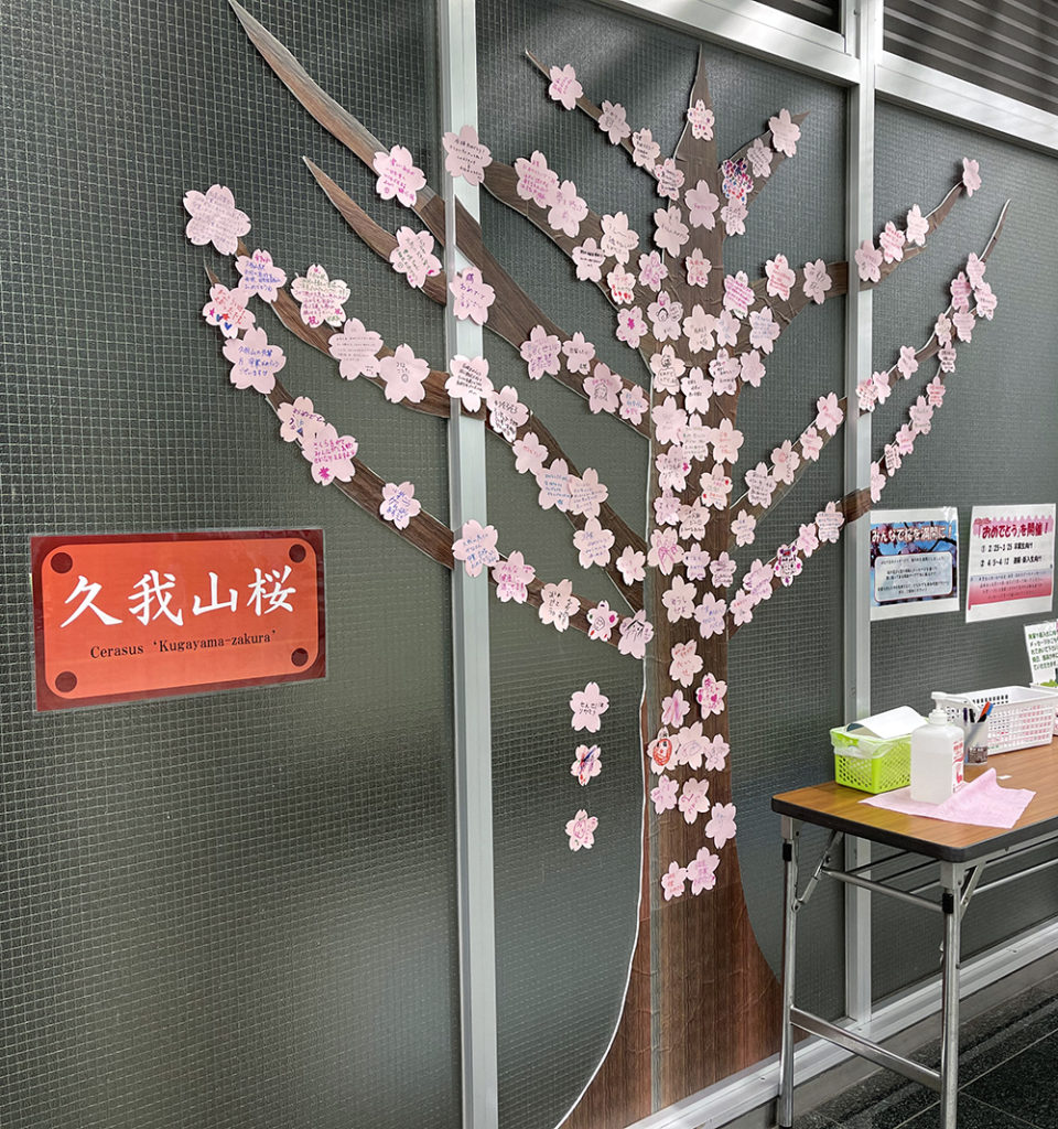 【6日目】3/2(火)の久我山桜