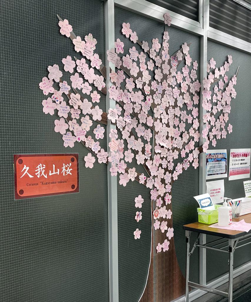 【7日目】3/4(木)の久我山桜