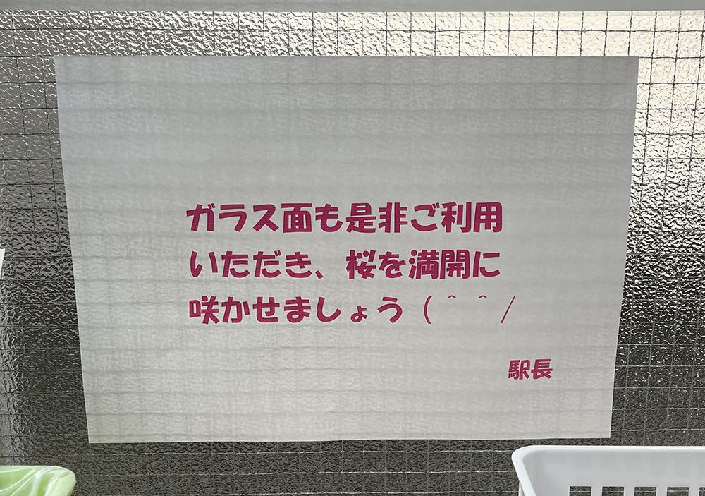 【7日目】3/4(木)の久我山桜の説明