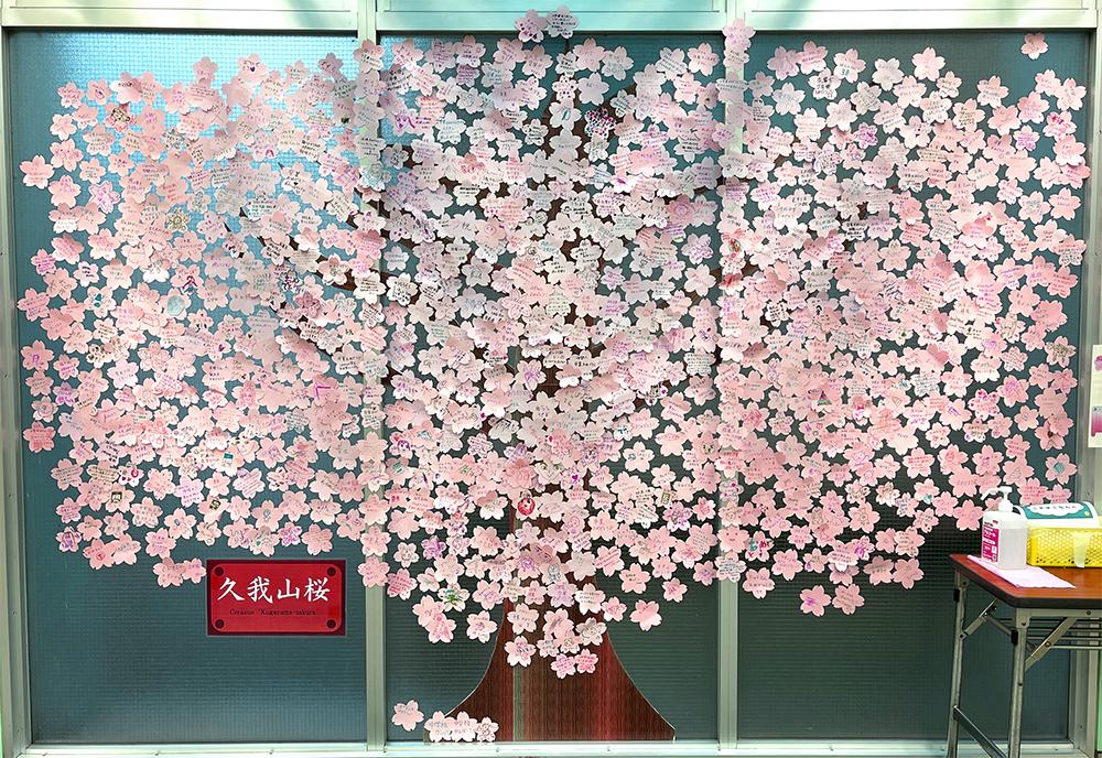 【24日目】3/20(土)の井の頭線久我山駅の久我山桜