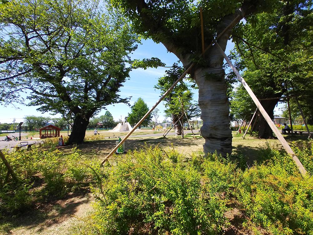 高井戸公園の木陰の散歩道
