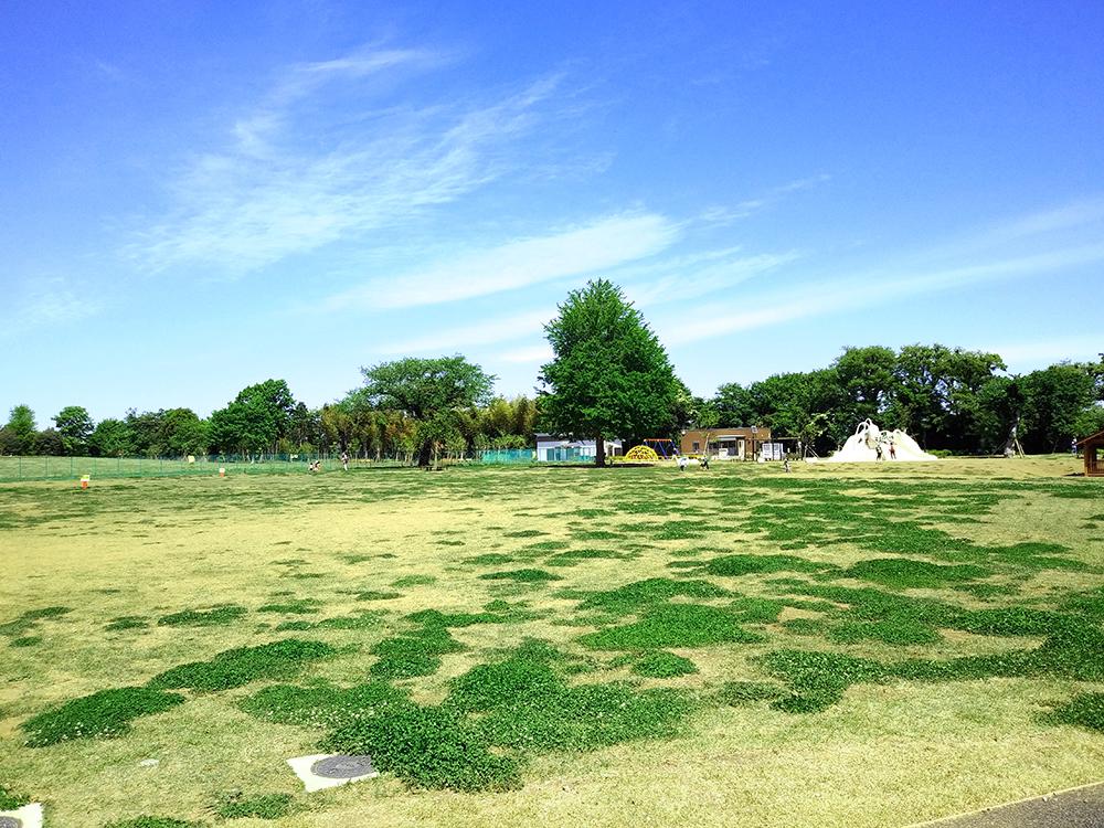 高井戸公園の開放済みの「芝生広場」の一部